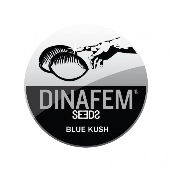 BLUE KUSH AUTOFLOWERING ® DINAFEM SEEDS