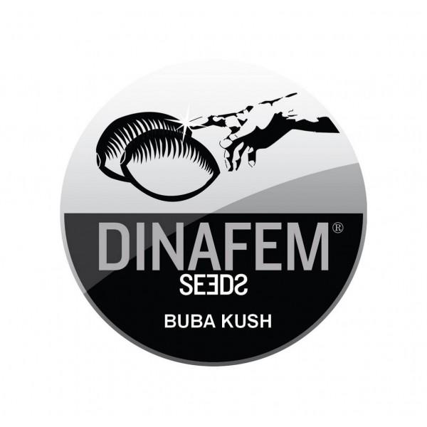 BUBBA KUSH AUTOFLOWERING ® DINAFEM SEEDS