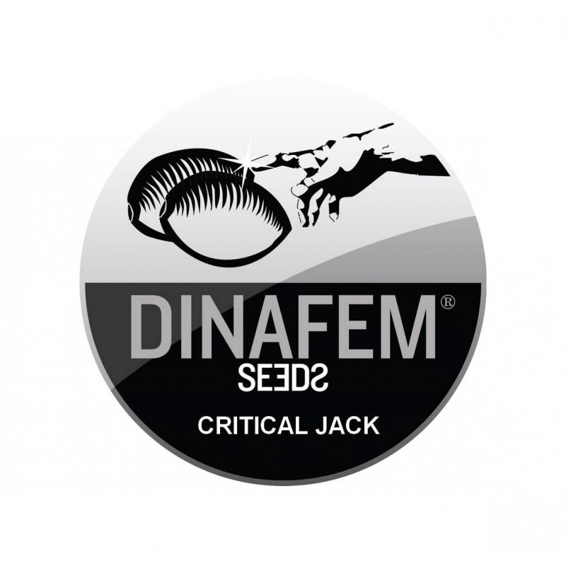 CRITICAL JACK AUTOFLOWERING ® DINAFEM SEEDS