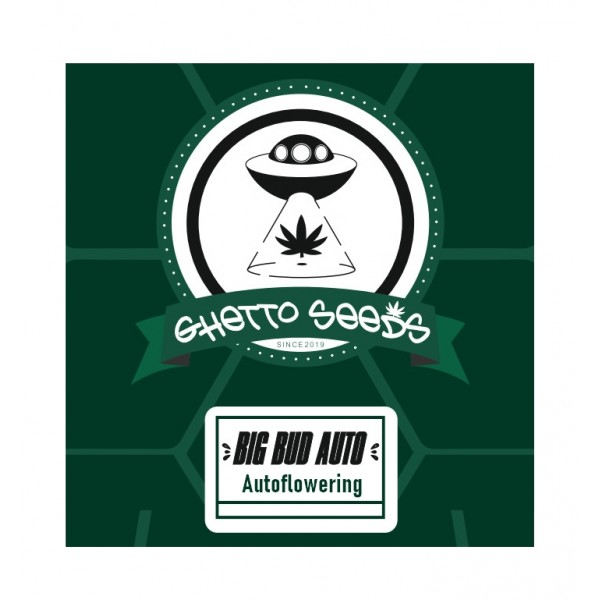 BIG BUD AUTO ® GHETTO SEEDS