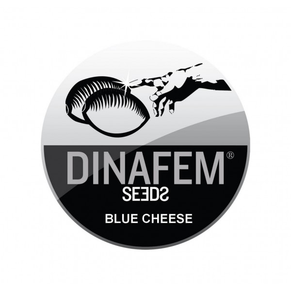 BLUE CHEESE AUTOFLOWERING ® DINAFEM SEEDS